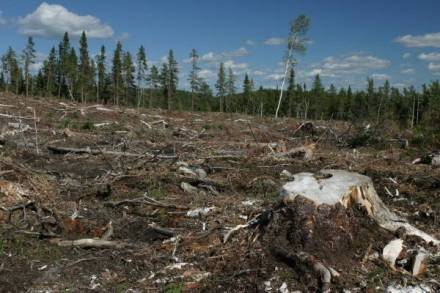 deforestation-2